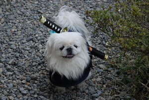 Narutodog